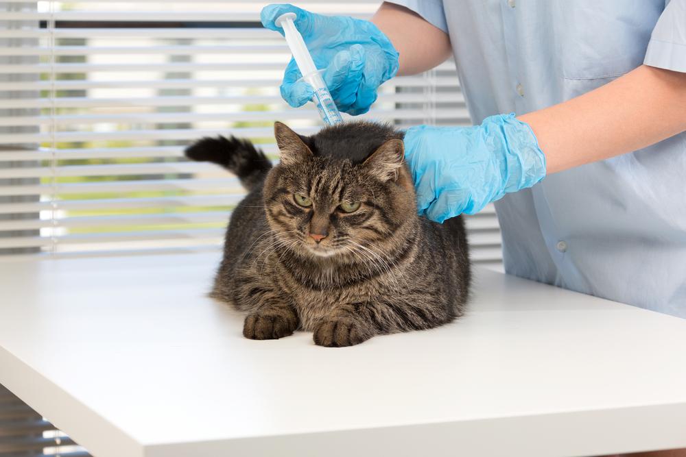 нарядная картинки прививок кошкам всё это